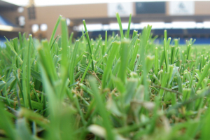 Natural and Hybrid Turf